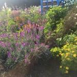 Bee Pagoda and flowers_OM
