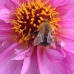 Bug on flower 1