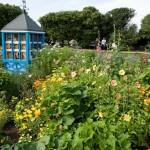 Heritage Rose & Bee Garden 2015