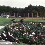 Rose Garden 1950s