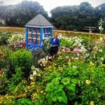 Vivian in Bee Garden copy