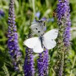 Butterflies After Refurbishment