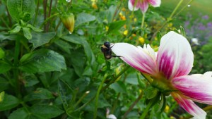 bedraggles bee
